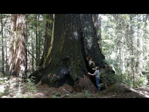 New California redwood park larger than Muir Woods