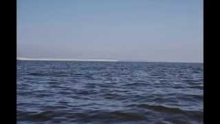 Судак и окунь Куршского залива.