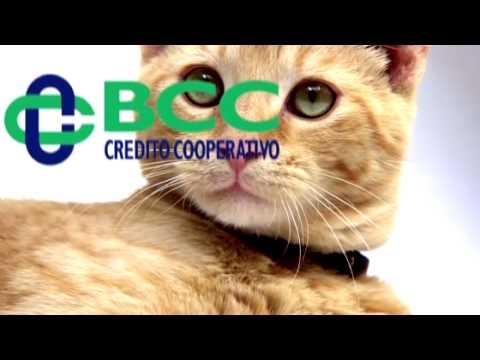 Le banche di credito cooperativo vicentine fanno scendere for Banche di credito cooperativo