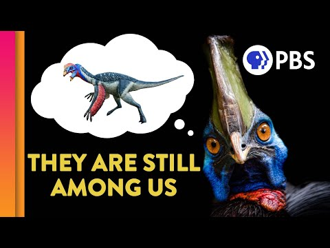 Did Dinosaurs Really Go Extinct?