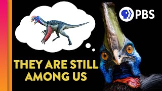 Did Dinosaurs Really Go Extinct?