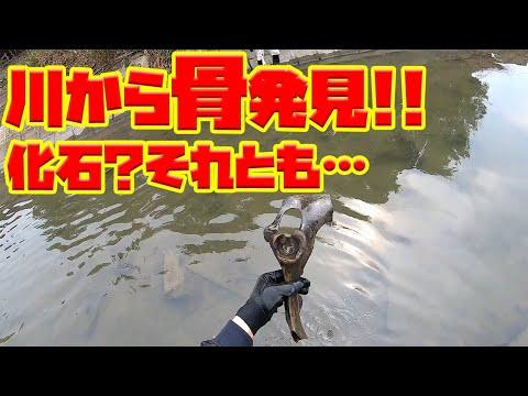 利根川水系で骨発見!!化石?それとも…