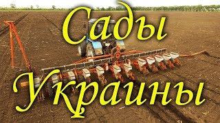 Сады Украины-посев. Кегичевский район, Харьковская обл.