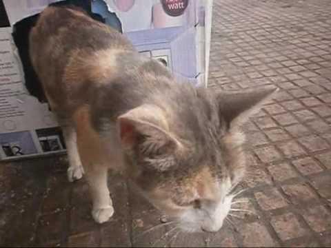 mocha f derb milan - قطة تولد قطط صغيرة