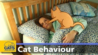 🐱 Cats and night-time waking   Behaviour guides: Episode four