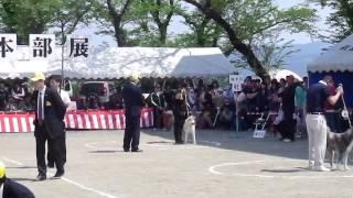 秋田いぬ展覧会.