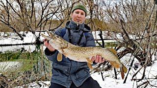 Крупная щука малой реки Со спиннингом зимой в 2020