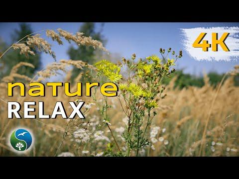 НЕЖНОСТЬ ВНУТРИ. 4K UHD. Природа, цветок,  пение птиц, музыка, релакс, красивое видео, медитация