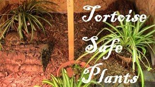 Download Tortoise-Safe Plants