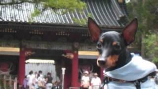 100801_100803 トイマンチェスターテリアNOELと一緒に那須・日光旅行.