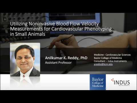 Noninvasive Blood Flow Velocity Measurements for Cardiovascular Phenotyping in Small Animals