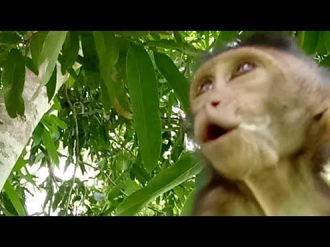 Baby Monkey Cry Cos Not See Mum ST713 Mono Monkey
