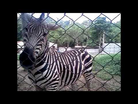 one day in delhi zoo