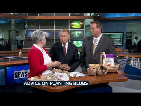 Lisa Briggs talks about how to plant bulbs