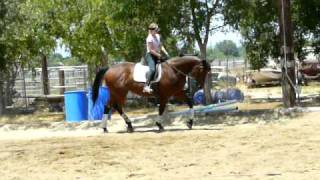 Batino - Hanoverian dressage horse for sale
