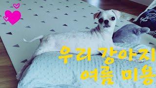 (강아지Vlog)스핑크스 강아지? 스핑크스 고양이? 여러분은?