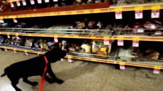 Tuck's Trip To Petsmart