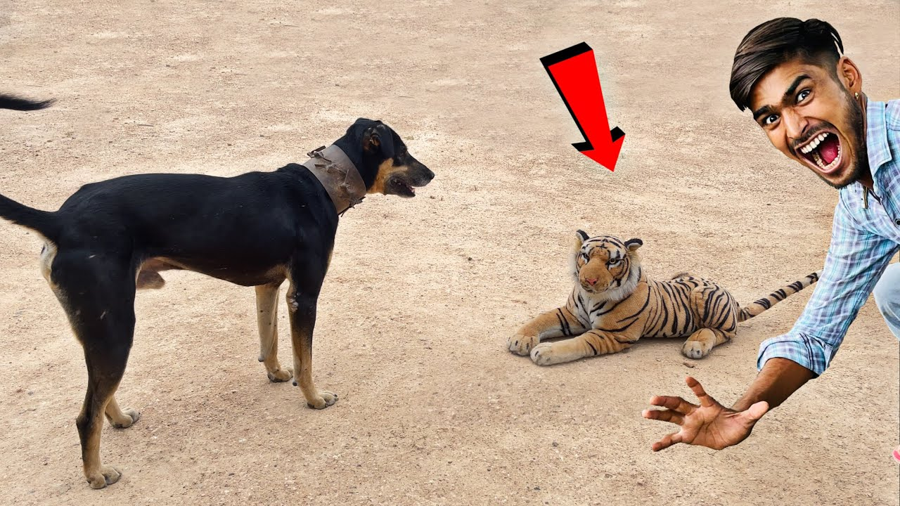 Fake Tiger Prank On Village Dogs 🐕 - Try Not To Laugh 😂