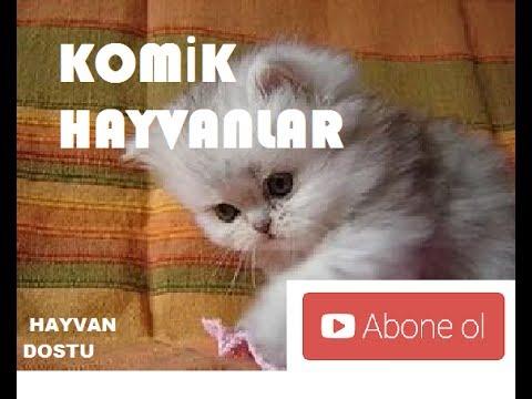 Komik Hayvan Videoları Derleme 2017 Youtube
