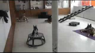 Chicago's Best Dog Training Caninewakeup.com!