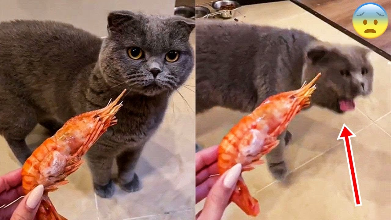 Cat Vs Laser Pointer - Funny Pet Reactions 🥰