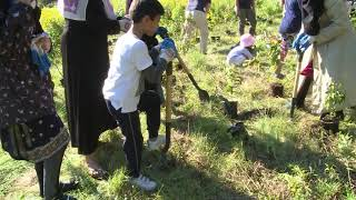 Lajna Canada Tree Planting Event