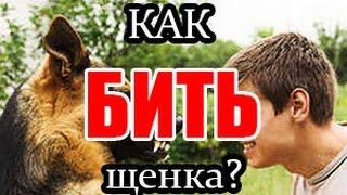 Злой Кинолог: как правильно бить щенка?