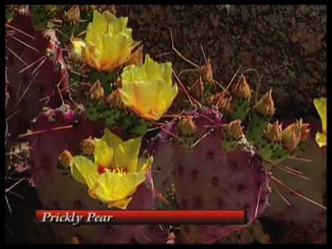 How To Choose The Right Shrub And Cactus For Your Xeriscape Garden Part 1