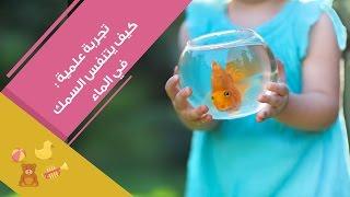 تجربة علمية: كيف يتنفس السمك في الماء |  How Do Fish Breathe In Water?