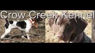 Gun Dogs For Sale Minnesota | Crow Creek Kennel