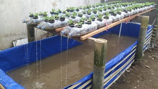 Using Plastic And Bamboo Bottles For Aquaponic Media