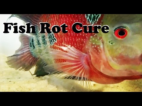 How To Treat Fin Rot