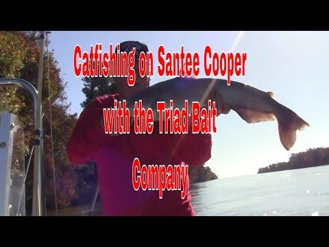 Video Catfishing magazines