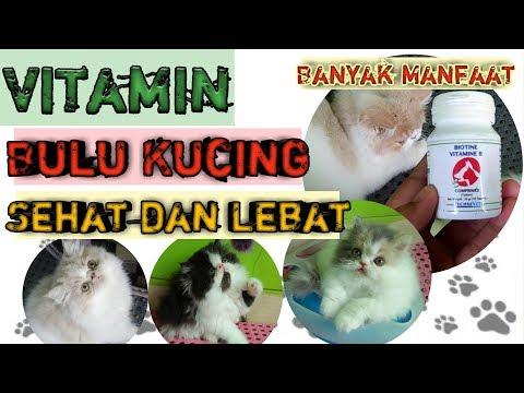 VITAMIN BULU KUCING | Cara Melebatkan Bulu Kucing | Merawat Bulu Kucing Persia