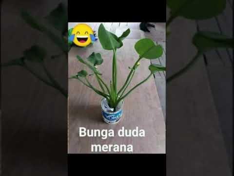 Nama Nama Bunga Yang Lagi Viral Dari Janda Bolong Sampai Duda Koreng Youtube