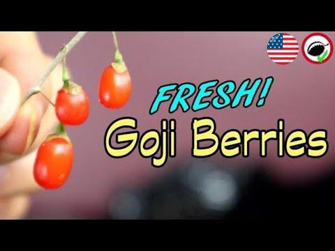What Goji Berries Taste Like Fresh And Dry Weird Fruit