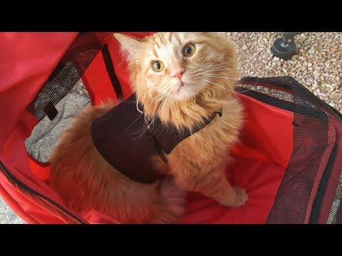 Answering Your Cat Stroller Questions!