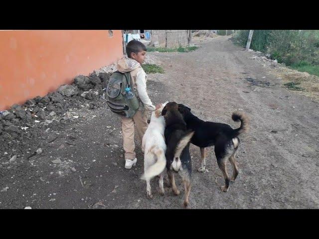 """أول  يوم في  المدرسة  النهارده  تعالو نشوفو  الكلاب """""""""""""""""""""""""""""""""""""""""""""""""""