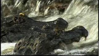 Be The Creature: Anaconda caiman fishing scene.mp4