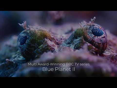 Blue Planet II Live | Australia |  Book Now Mp3