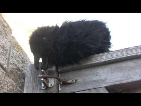 Real Raven Problem Solving