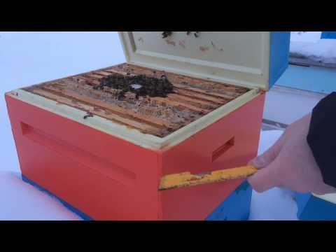 Зимовка пчел на улице в улье из ППУ Ру Улей, зимний осмотр