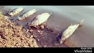 fish comedy video// fish vinod kumar