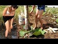 Primitive Technology Beautiful Girl Catching fish & Eels Using Banana Tree - 100% work