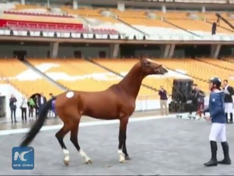 Mln-dollar Akhal-Teke horses compete in S China show