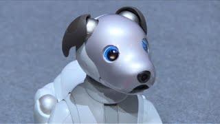 O novo cão robô da Sony