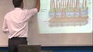 Lecture 2 : Bacterial morphology and structure - 1