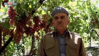 دهوك.. الأولى في إنتاج العنب بكردستان