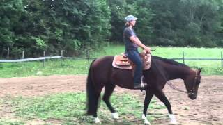 The Touch Ofa Cowboy. 2012 gelding by A Touch of Sudden out of a Sweet Talkin Chip mare.