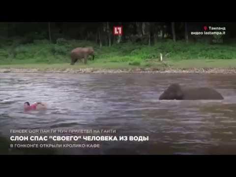 Слон спас